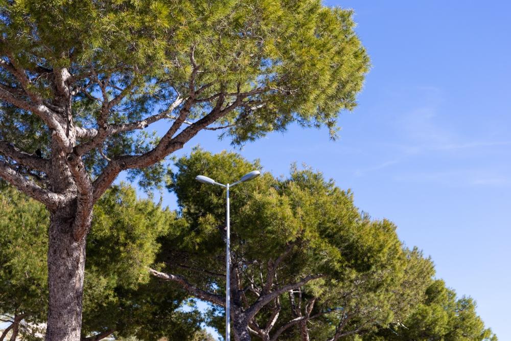 Mallorca19_IMG_6603